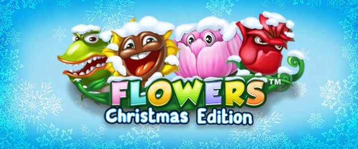 Flowers-Christmas-edition